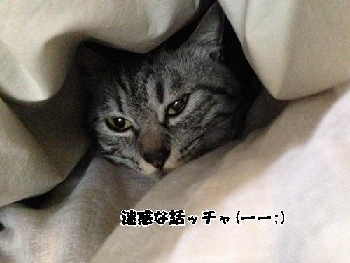 111_20140302131935f9e.jpg