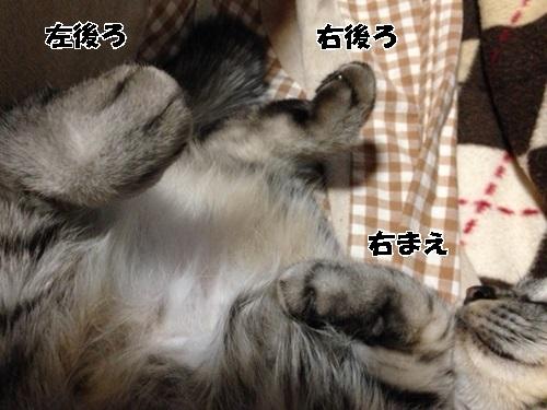 85_20140412230226fff.jpg