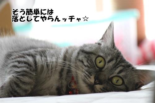 IMG_3133.jpg