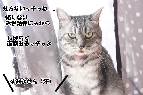 IMG_3856.jpg