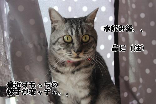 IMG_3863.jpg