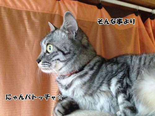 IMG_5219.jpg