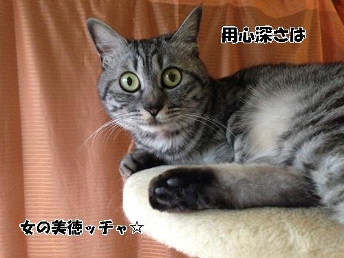 IMG_5227.jpg