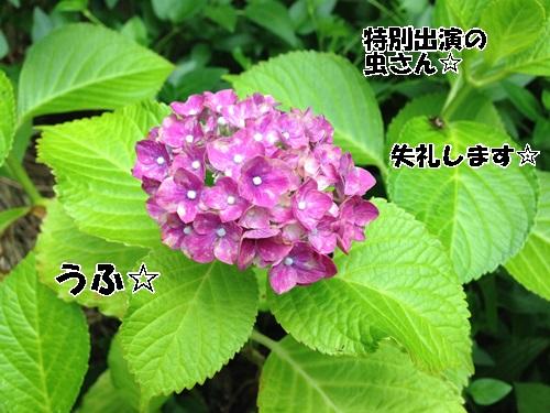 IMG_5670.jpg