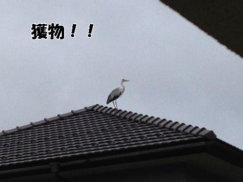 IMG_5695.jpg
