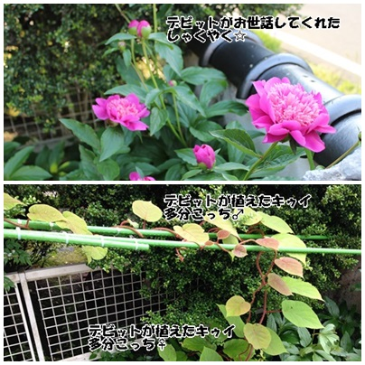 page_20140622143648e7b.jpg