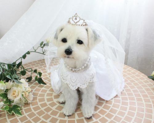 修正花嫁4