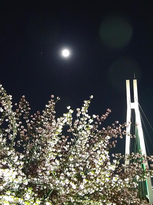 23桜月橋