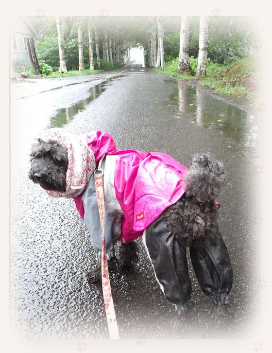 20140727雨散歩-1