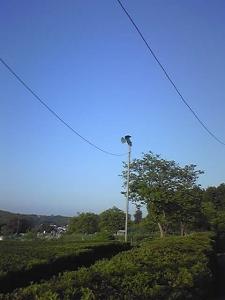 140502_yoitenki.jpg