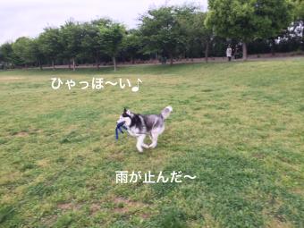 IMG_0845_Fotor.jpg