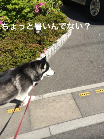 IMG_0861_Fotor.jpg