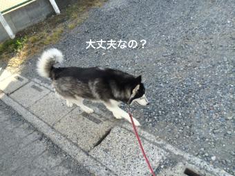 IMG_0888_Fotor.jpg