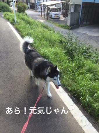 IMG_0889_Fotor.jpg