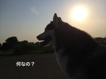 IMG_0924_Fotor.jpg