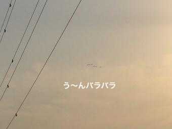 IMG_0925_Fotor.jpg