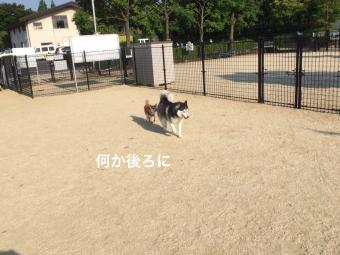 IMG_0935_Fotor.jpg