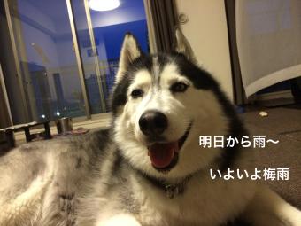 IMG_0943_Fotor.jpg