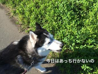 IMG_0987_Fotor.jpg