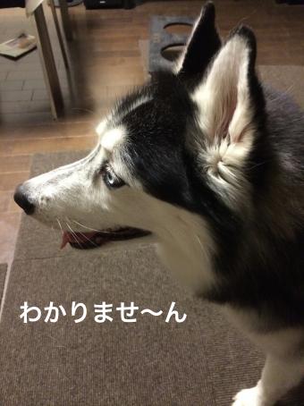 IMG_0997_Fotor.jpg