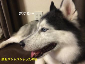 IMG_1135_Fotor.jpg