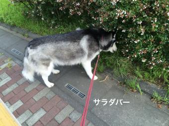 IMG_1138_Fotor.jpg