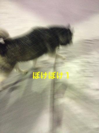 IMG_3701_Fotor.jpg
