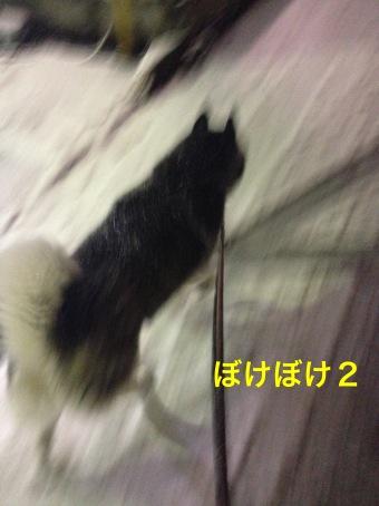 IMG_3702_Fotor.jpg