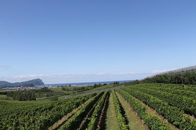 第2回ワインセミナー 2014-08-26 #5338