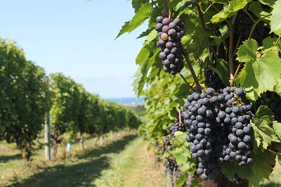 第2回ワインセミナー 2014-08-26 #8898