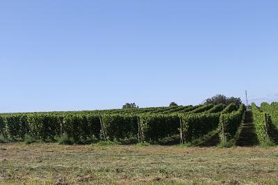 第2回ワインセミナー 2014-08-26 #20482