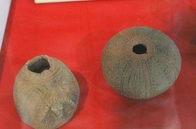 水産博物館 特別展 2014-08-30 032