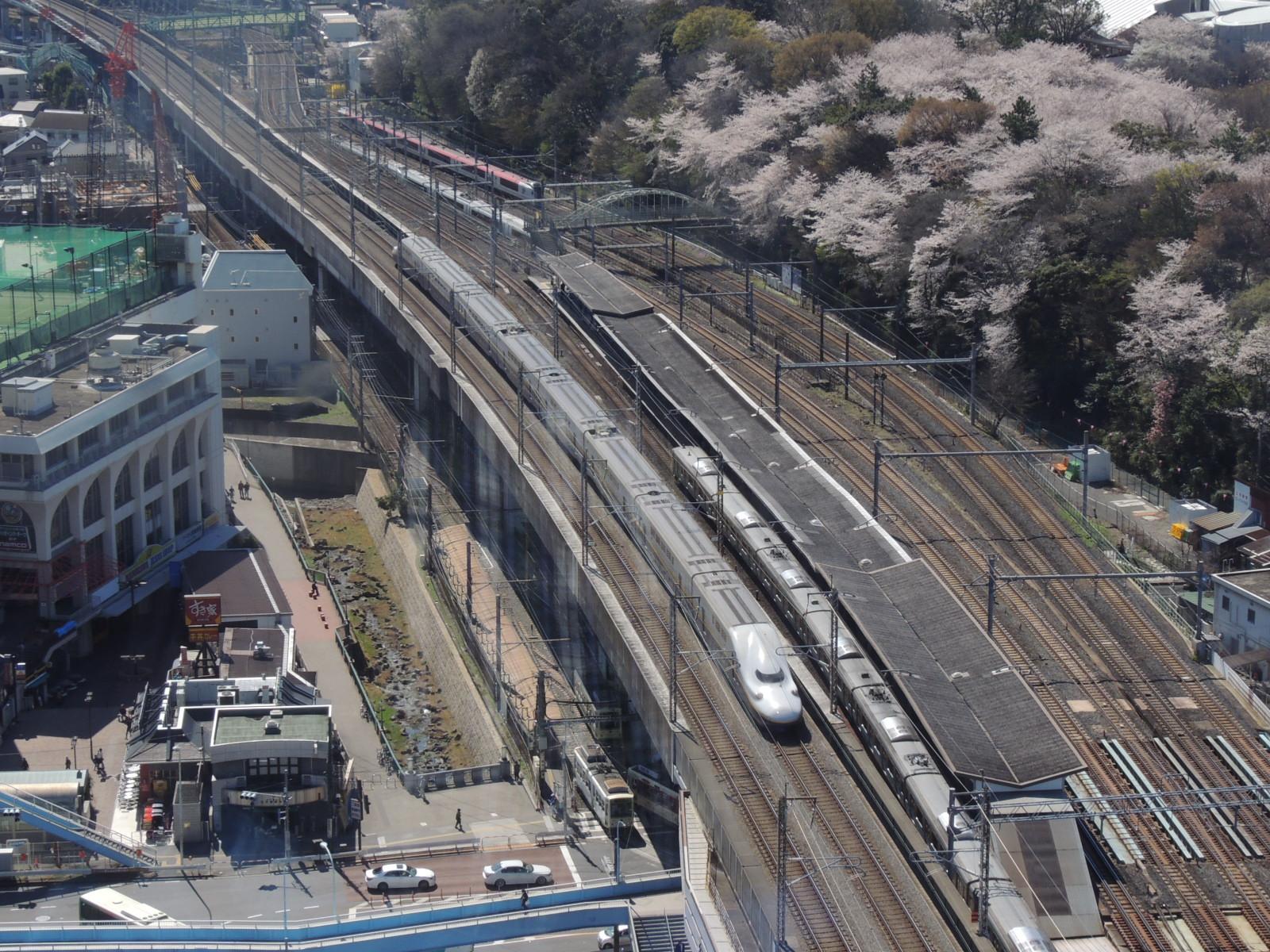 E4系と飛鳥山桜 (2)