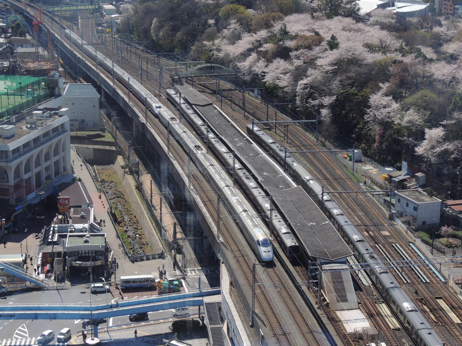 E3系つばさ号と飛鳥山桜 (3)