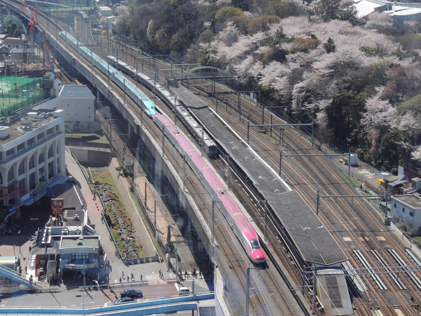 E5系+E6系飛鳥山桜 (3)