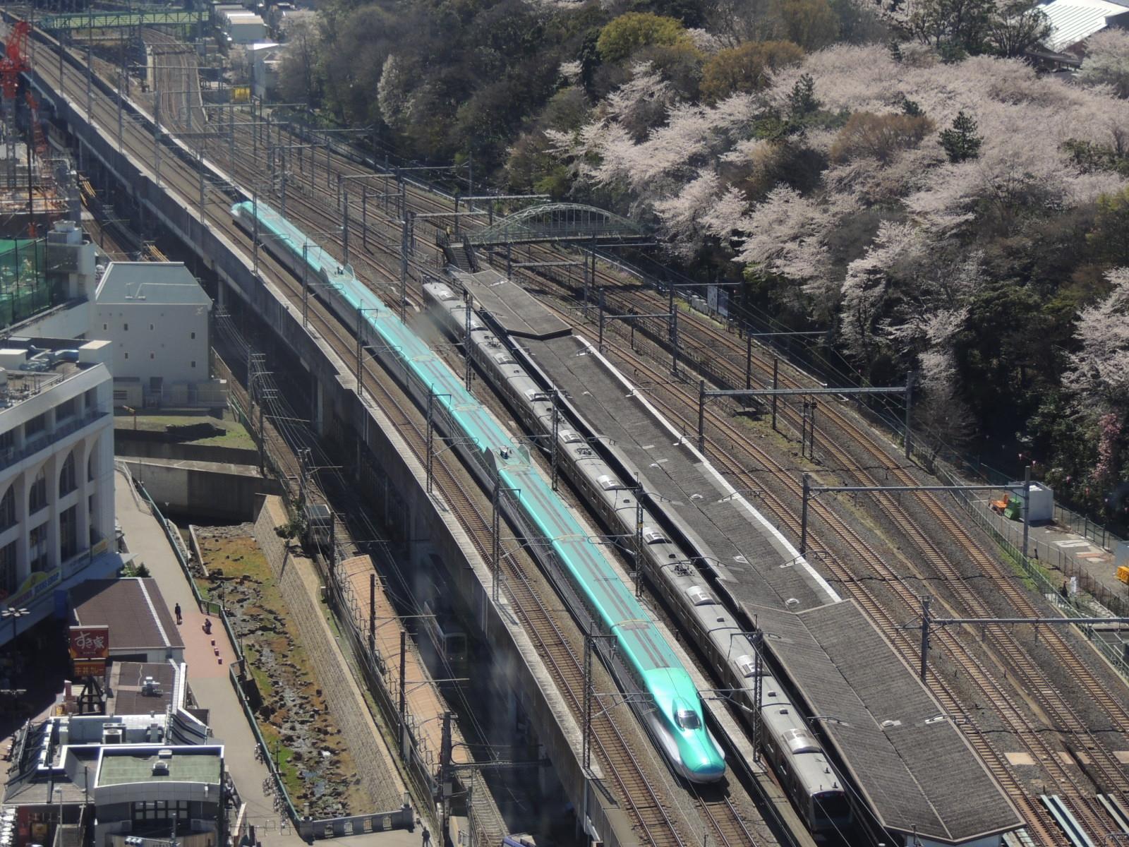 E5系飛鳥山桜 (2)