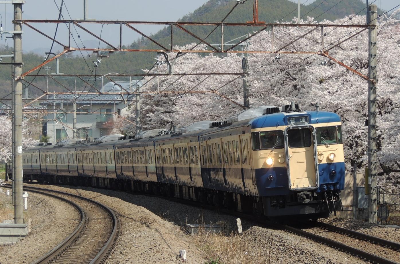 115系C1編成スカ色×桜(勝沼ぶどう郷) (3)