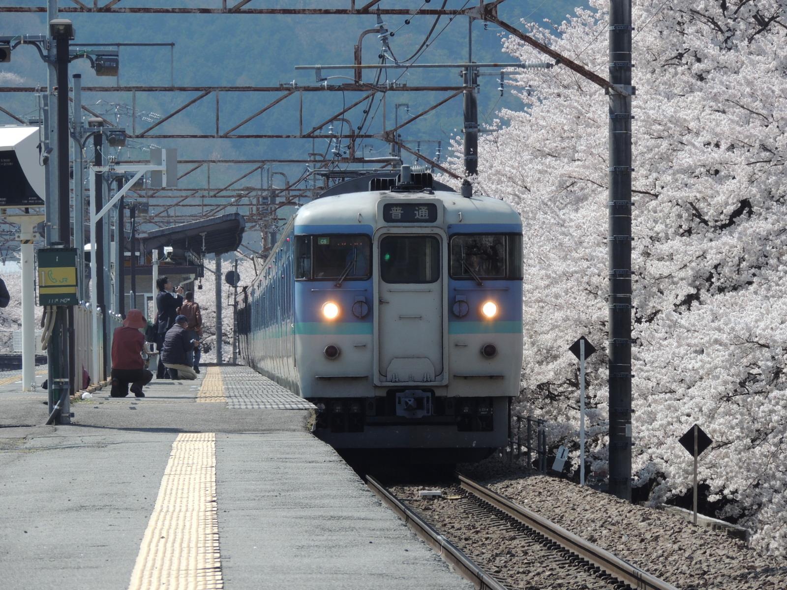 115系C5編成信州色×桜 勝沼ぶどう郷 (4)