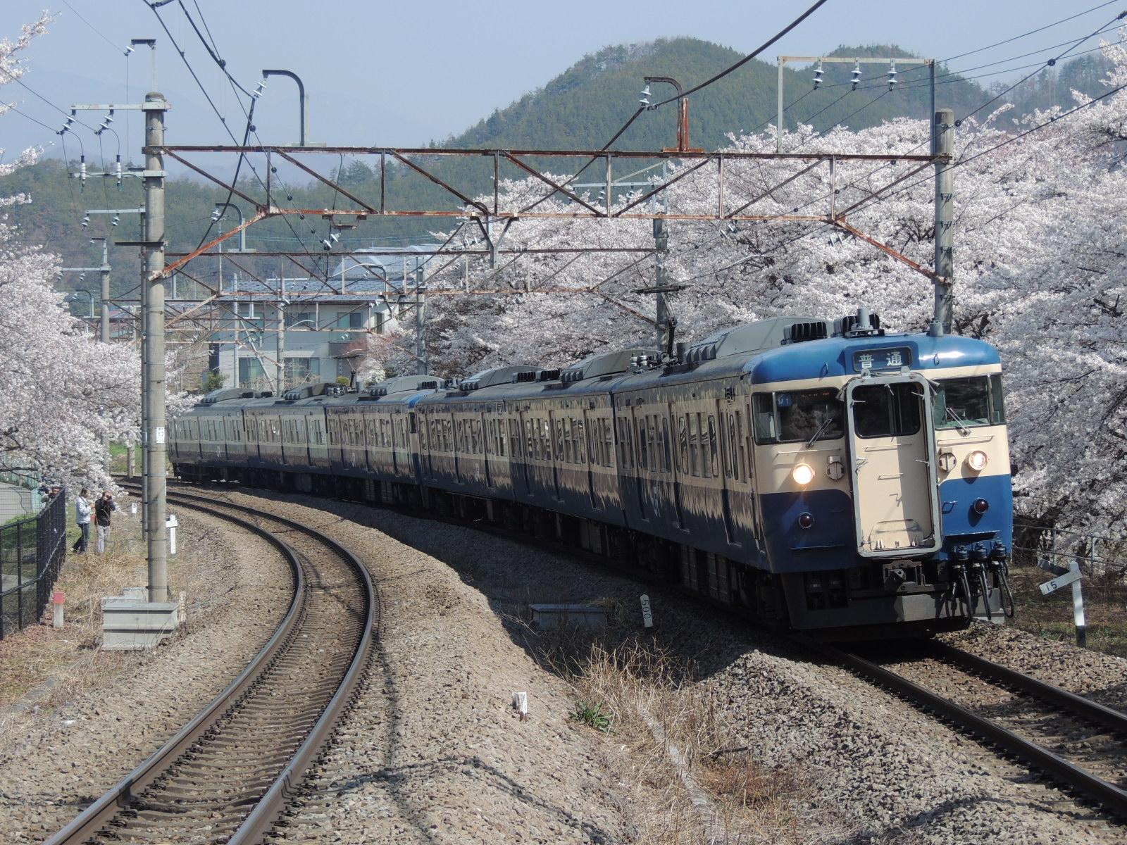 115系M7+M10編成×桜 勝沼ぶどう郷 (3)