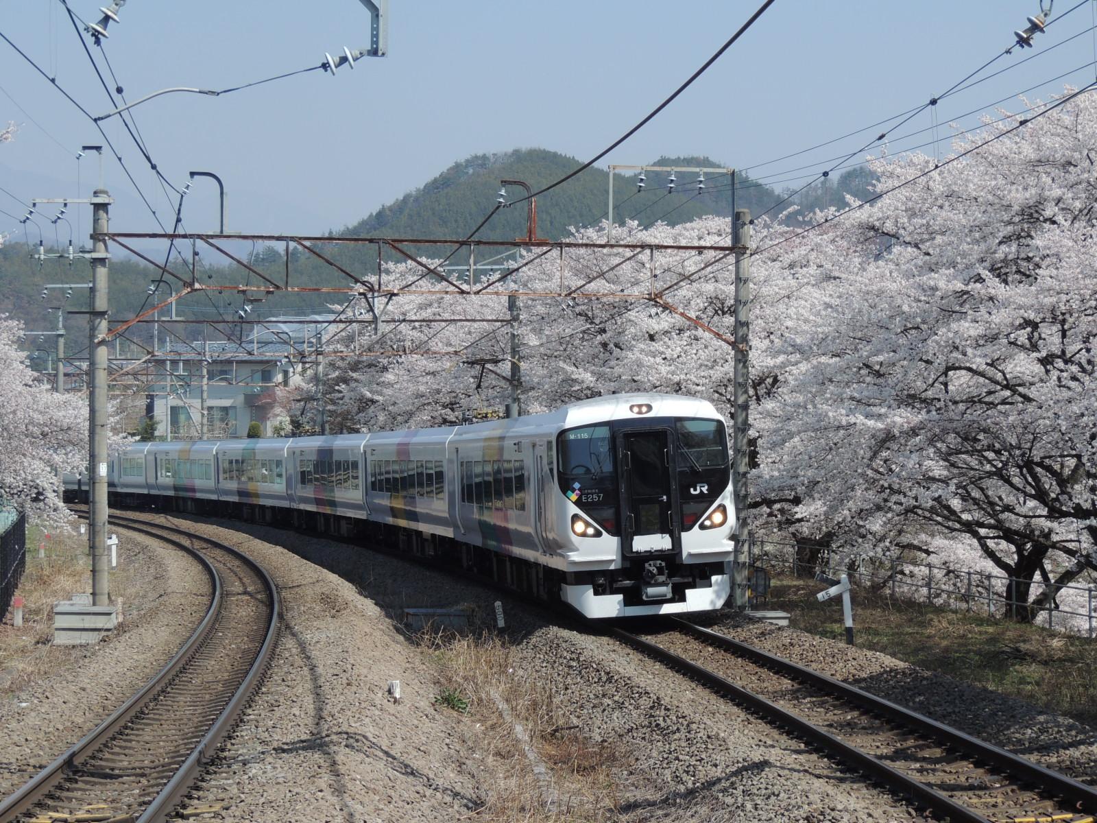 E257系かいじ号×桜 勝沼ぶどう郷 (2)