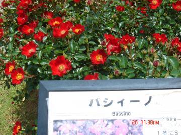 DSC03057_convert_20140529222147.jpg