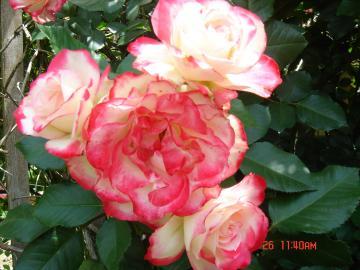 DSC03059_convert_20140529222248.jpg