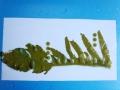 wakame2.jpg