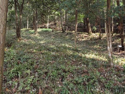 セリバオウレンの園2176
