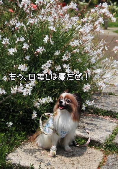 IMG_18846月の犬@6月の犬@