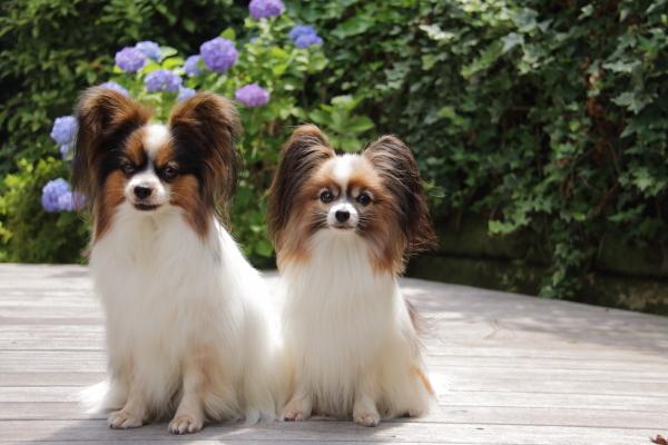 IMG_4054紫陽花紫陽花と犬