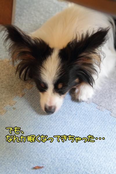 IMG_9736サブレ マッサージサブレ マッサージ