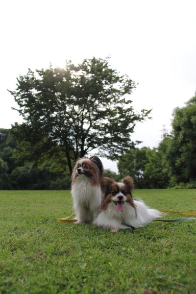 IMG_4101芝生のふるさと公園芝生のふるさと公園