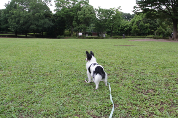IMG_4128芝生のふるさと公園芝生のふるさと公園