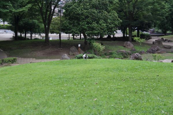 IMG_4137芝生のふるさと公園芝生のふるさと公園